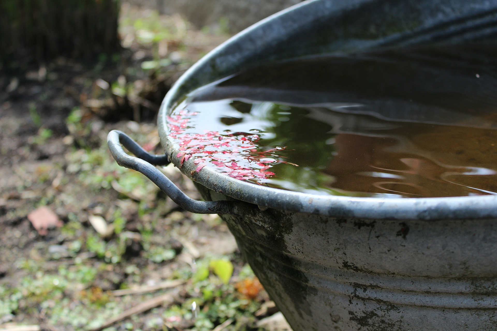 Wasser – Gründe und Wege der Regenwassernutzung