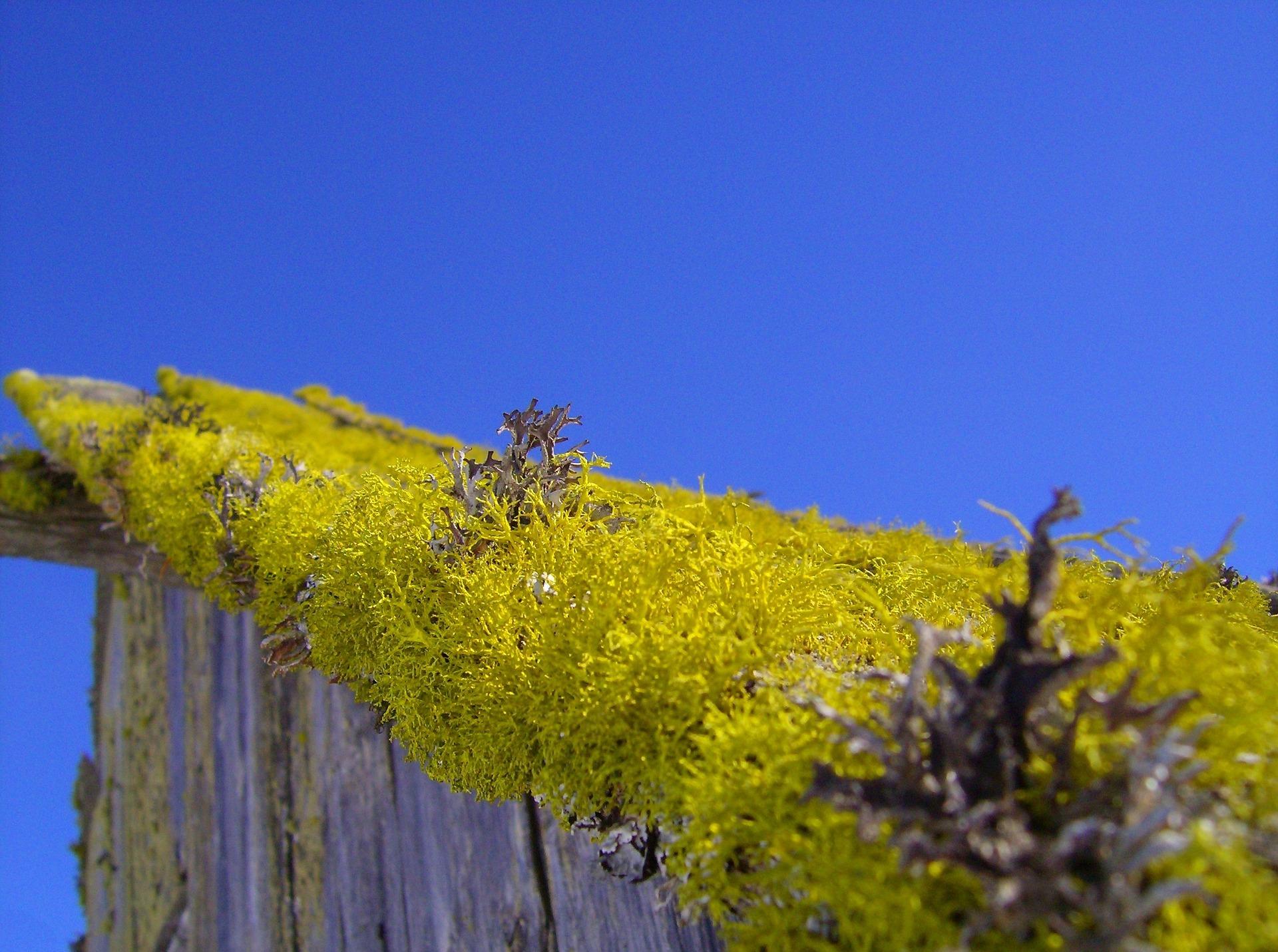 Dachbegrünung – Der Blumenstrauß vom eigenen Dach