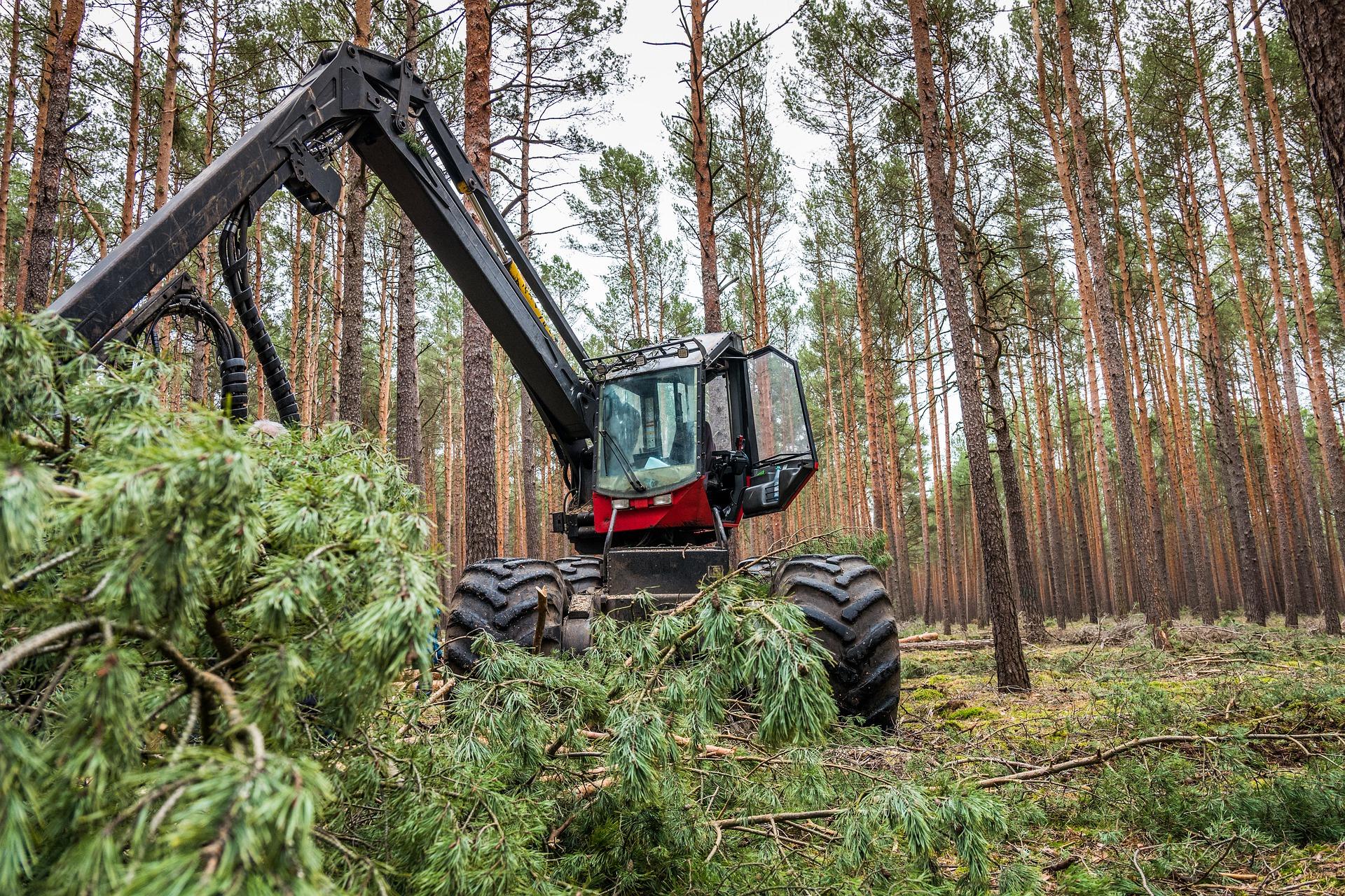PEFC und FSC – Holzwaren in Deutschland