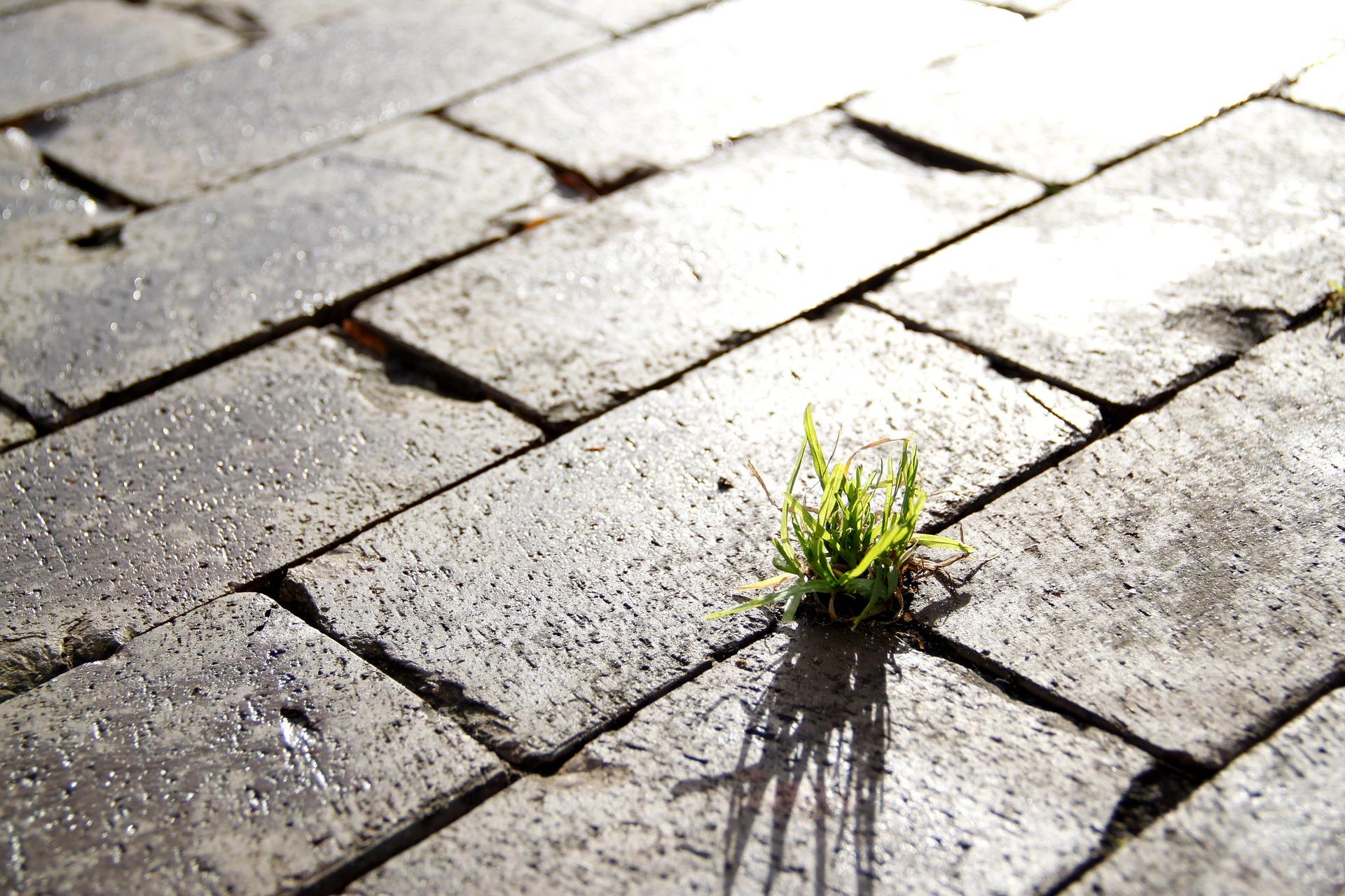 Was ist eigentlich Nachhaltigkeit? – Versuch einer Definition
